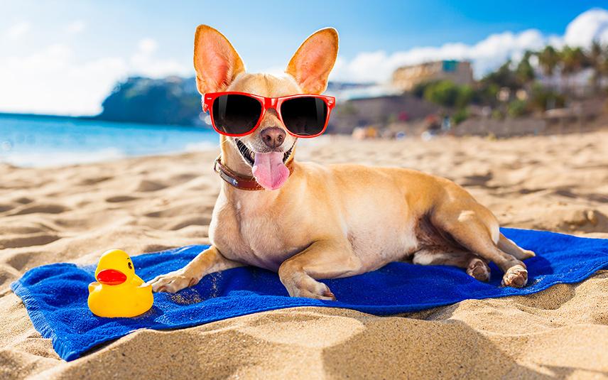 Самая длинная набережная в Европе и лучший пляж для собак появятся в Аликанте