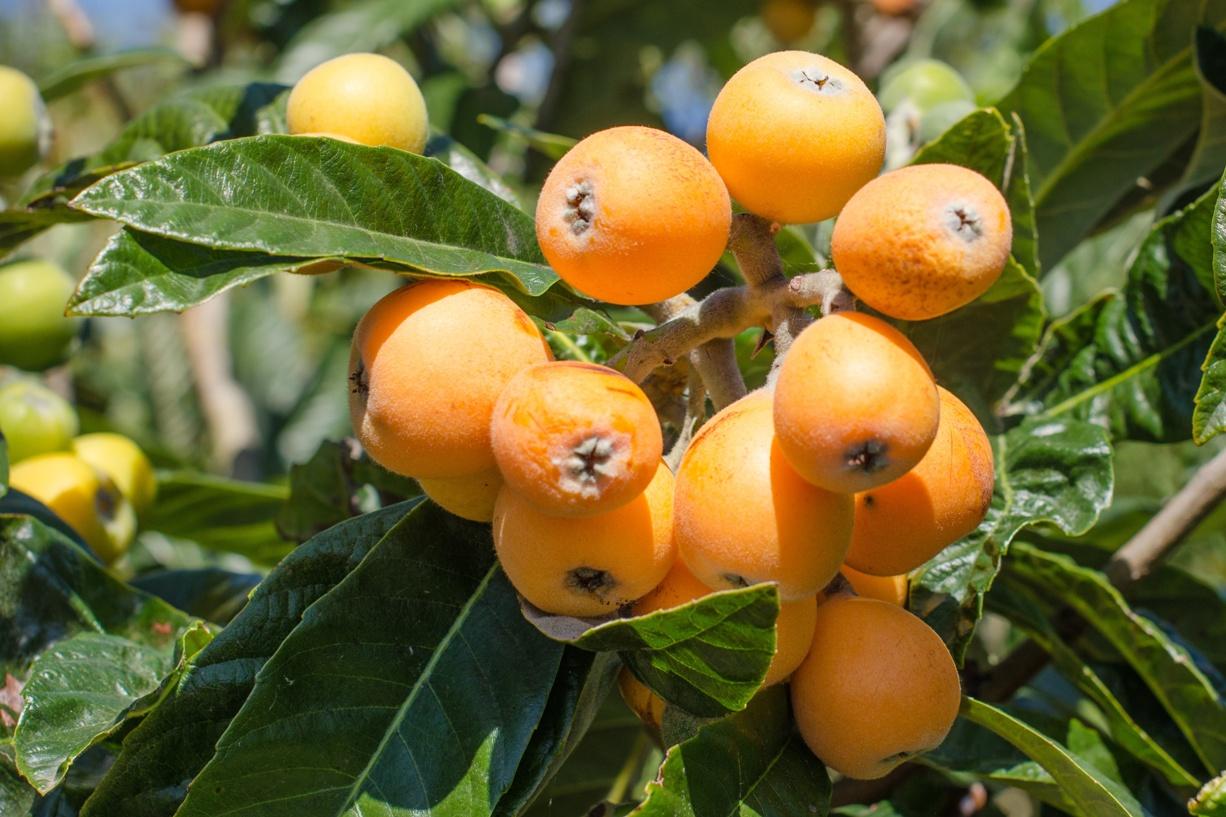 Из этого фрукта можно приготовить множество вкусных десертов