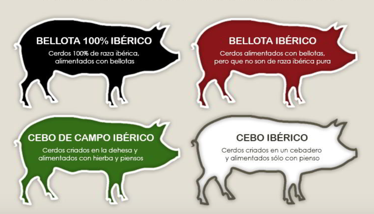 Черная иберийская свинья