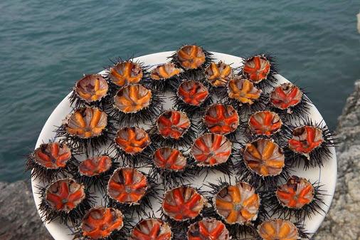 как готовить морских ежей