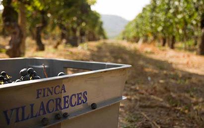 Испанское вино стоимостью до 10 евро — лучшее в мире