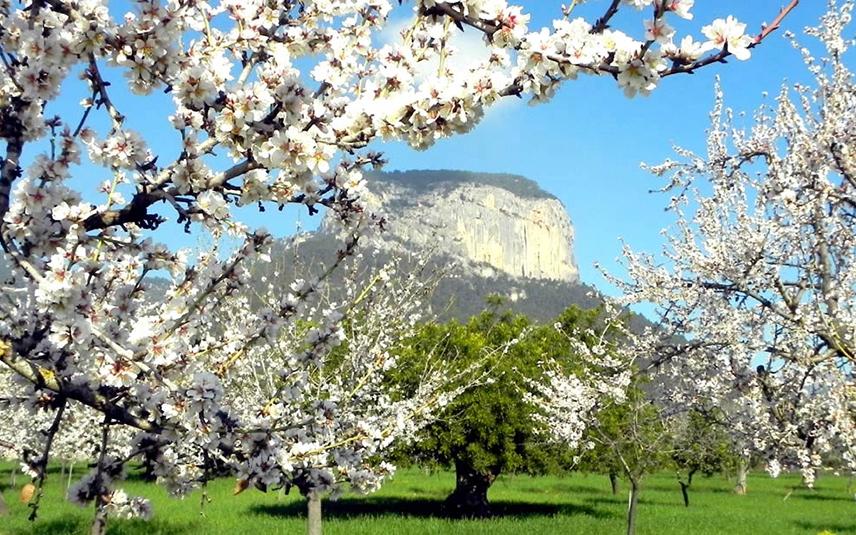 Весна будет более теплой, чем обычно, почти по всей Испании
