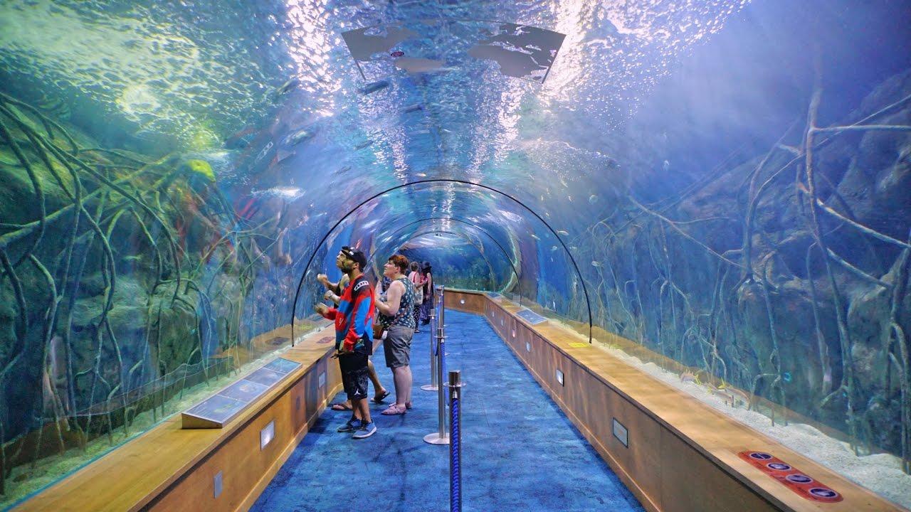 Биопарк и океанариум Валенсии празднуют дни рождения