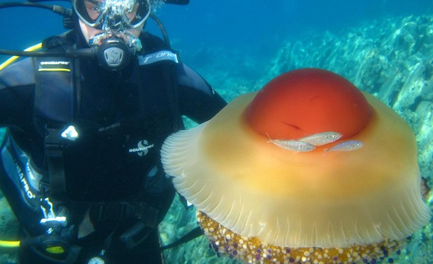 В Мар Менор протянут сети от медуз