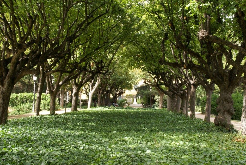 Jardines del palacio de pedralbes en barcelona parque for Jardines del palau
