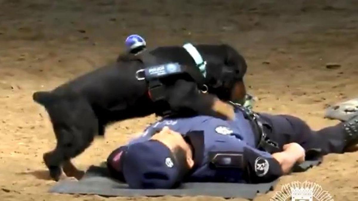 Картинки по запросу Пончо – полицейский пес
