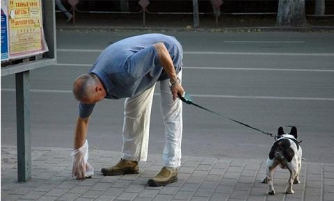 Июль.Пожилой горожанин убирает за своей собакой на ул. Плехановской.
